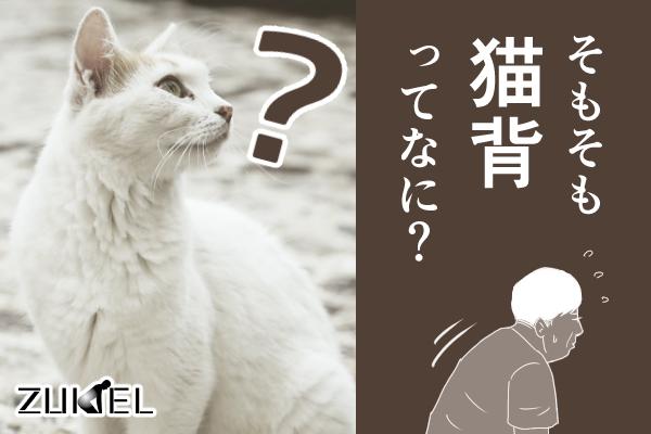 猫背の疑問