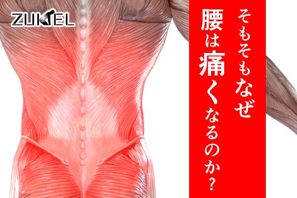 腰はなんで痛くなるの?